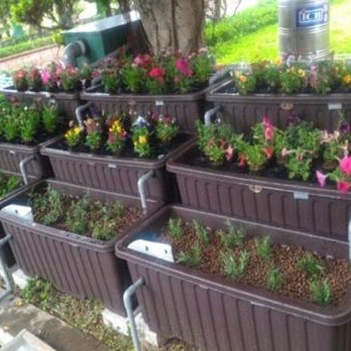 適合社區庭院 、花園的可食風景