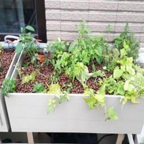 適合家庭陽台,亦可模組組裝延生用於屋頂或社區。